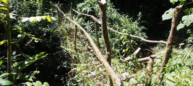 Dag 131-135 (4-8 jan.): Dwalen door de jungle