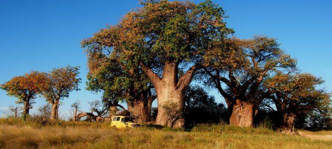 Dag 256-260 (9-13 mei): Topdagen in de moerassen van de Okavango, Nxai NP en de zoutvlaktes van Ntwetwe