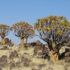 Dag 311-315 (3-7 juli): Vergeten kraters, kokerbomen en naar Zuid Afrika