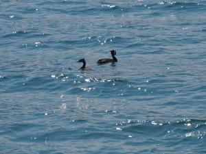 P9089827 Futen op Iseo meer