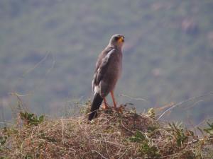 PC057824 - Vogel onderweg naar South Horr