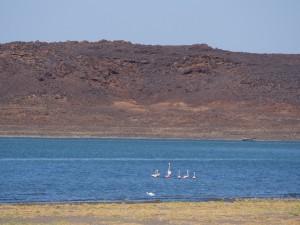PC077988 - Flamingo's onderweg naar Sibiloi NP