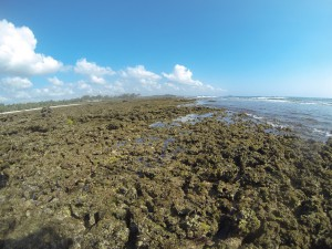 GOPR7674 - Tiwi beach