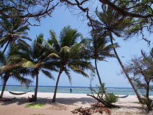 PC258488 - Tiwi beach