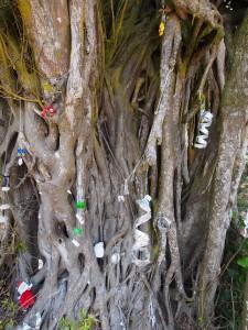 PC258493 - Kerst mangroveboom aan Tiwi beach