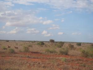 PC288594 - Hartebeesten in Tsavo West NP
