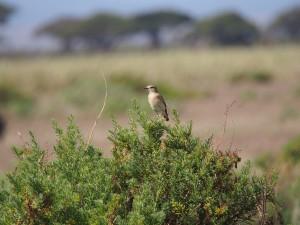 PC298752 - Vogel Amboseli NP