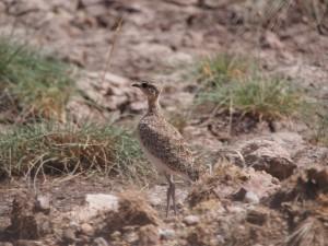 PC298797 - Vogel Amboseli NP