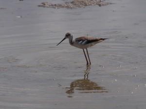PC298933 - Vogel Amboseli NP