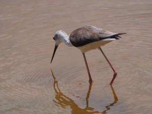 PC298955 - Vogel Amboseli NP