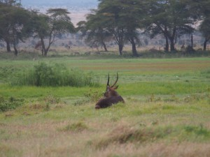 PC299015 - Onbekend dier Amboseli NP