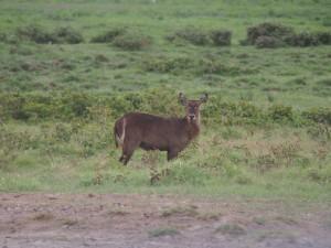 PC299028 - Onbekend dier Amboseli NP