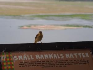 PC299046 - Vogel Amboseli NP