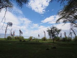 P1029175 - Naivasha meer