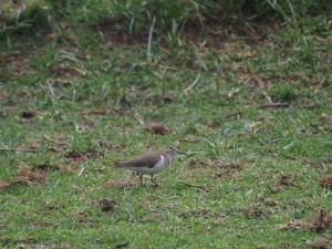 P1029177 - Vogel bij Naivasha meer