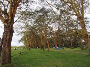 P1029187 - Camping bij Naivasha meer