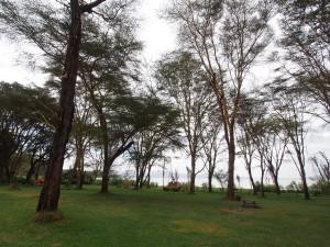 P1029205 - Camping bij Naivasha meer