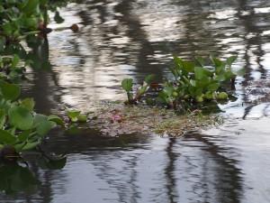 P1029218 - Naivasha meer