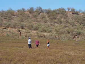 P1039272 - Giraffes met publiek Hells Gate NP