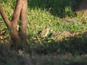 P1059524 - Vogel Victoria meer