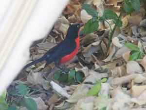 P1059527 - Vogel Victoria meer