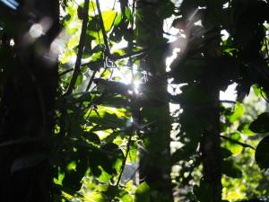 P1069547 - Kakamega Forest NR