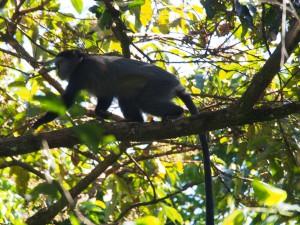 P1069574 - Primaat Kakamega Forest NR