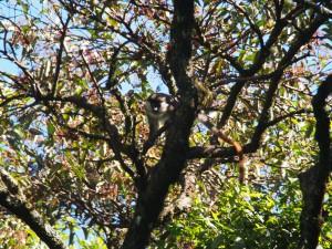 P1069580 - Primaat Kakamega Forest NR