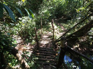 P1069596 - Bruggetje Kakamega Forest NR