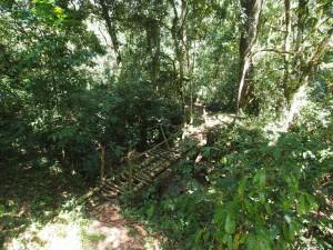 P1069621 - Bruggetje Kakamega Forest NR