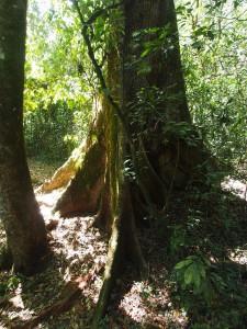 P1069628 - Kakamega Forest NR