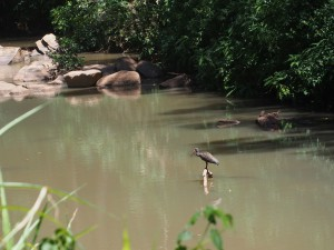 P1069655 - Kakamega Forest NR