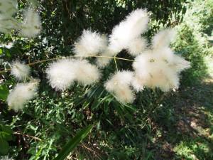 P1069662 - Kakamega Forest NR