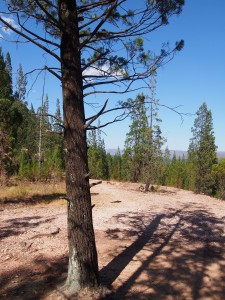 P1069675 - Kakamega Forest NR