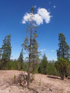P1069676 - Kakamega Forest NR