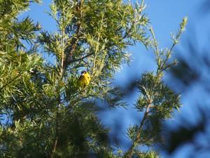 P1079680 - Vogel Kakamega Forest NR