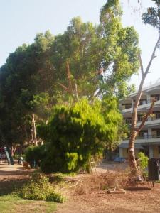 PA194007 - Bomen snoeien