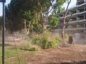 PA194011 - Bomen snoeien