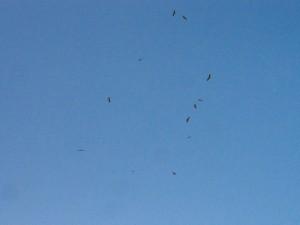 PB015015 - Roofvogels bij Gebel Barkal