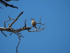 PB115551 - Vogels bij Tim and Kims Village