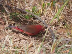 PB125753 - Vogels bij Tim and Kims Village