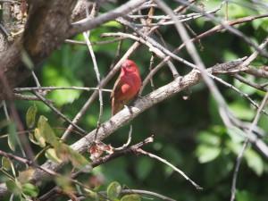 PB125793 - Vogels bij Tim and Kims Village