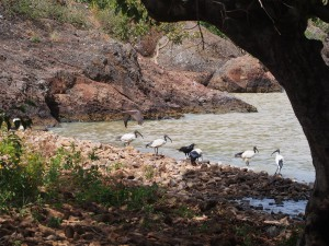 PB125808 - Vogels bij Tim and Kims Village