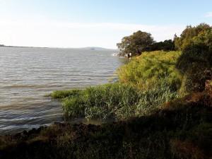 20161122 165420 - Papyrus in Tana meer