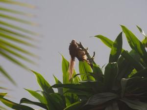 PB246887 - Vogels