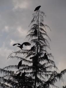 PB246979 - Roofvogels