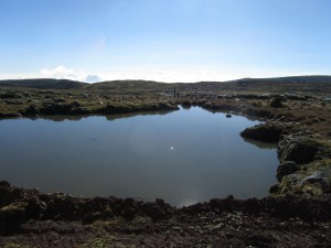 IMG 4142 - Bale Mountains NP