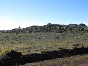 IMG 4147 - Bale Mountains NP