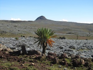 IMG 4150 - Bale Mountains NP