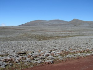 IMG 4154 - Bale Mountains NP